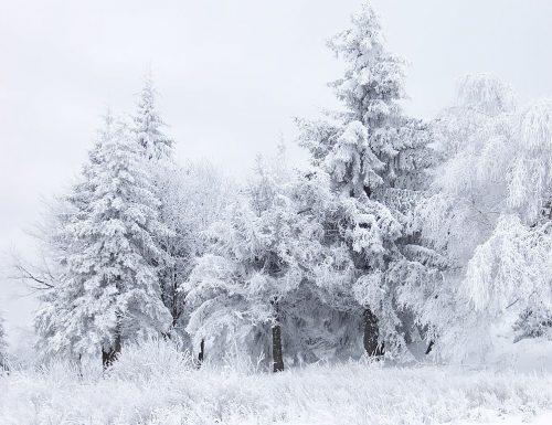 Previsione Lotto Sotto La Neve (Chiusa +)